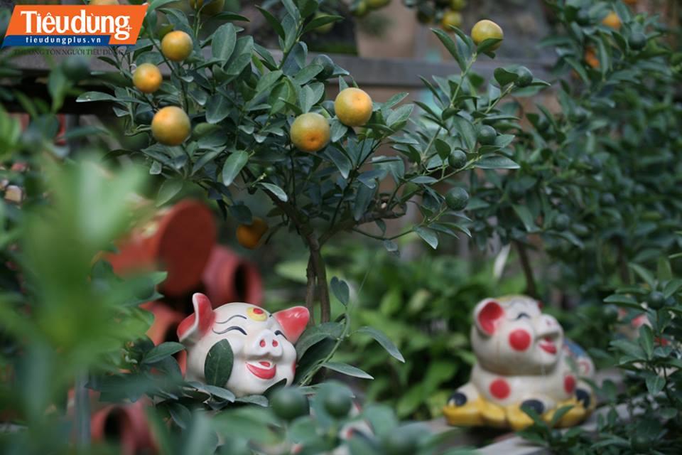 có nhiều kiểu dáng, kích thước nên mỗi gốc quất bonsai