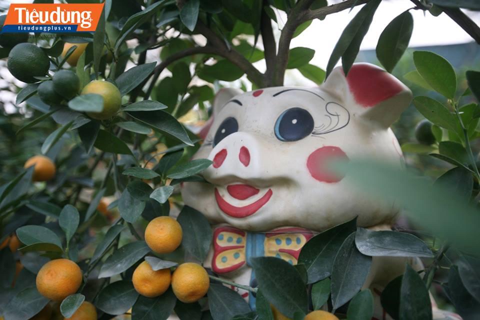 Cận cảnh quất bonsai giá 3 triệu đồng chơi Tết Nguyên đán 2019 hút khách nườm nượp