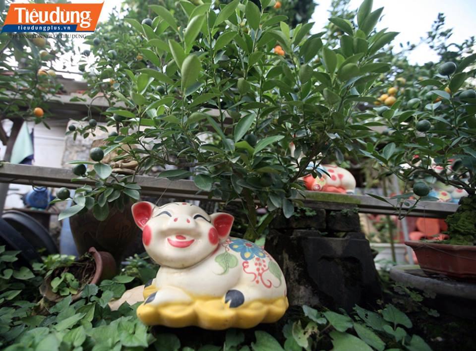 giá mỗi chậu quất bonsai cho Tết Nguyên đán 2019 thấp nhất cũng khoảng 1,5 triệu đồng, cao nhất khoảng 3 triệu đồng.