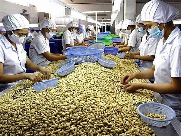 Thu gần 3,1 tỷ USD từ xuất khẩu hạt điều 11 tháng đầu năm