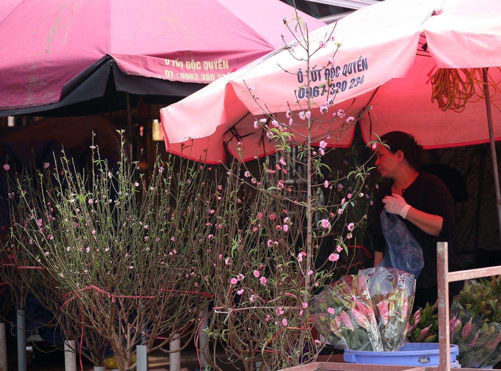 Dịp Tết Dương lịch: Đào Nhật Tân bất ngờ xuống phố giá chỉ từ 50.000 đồng/cành