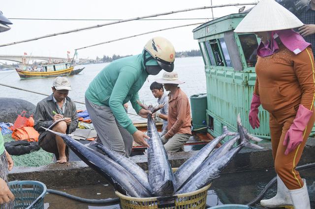 Luật Thủy sản có hiệu lực sẽ góp phần nâng cao thu nhập, cải thiện sinh kế cho ngư dân. Ảnh: TTX