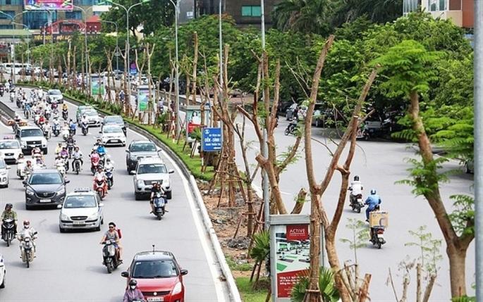 Năm 2019, Hà Nội phấn đấu trồng mới khoảng 400.000 cây xanh