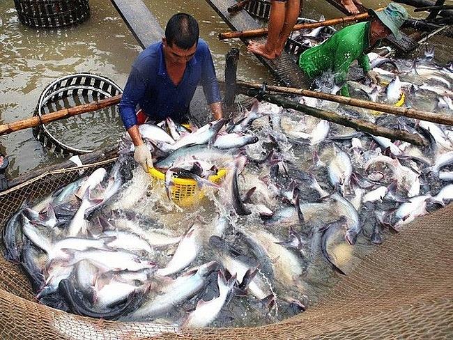 Năm 2018 đánh dấu thành công của xuất khẩu cá tra