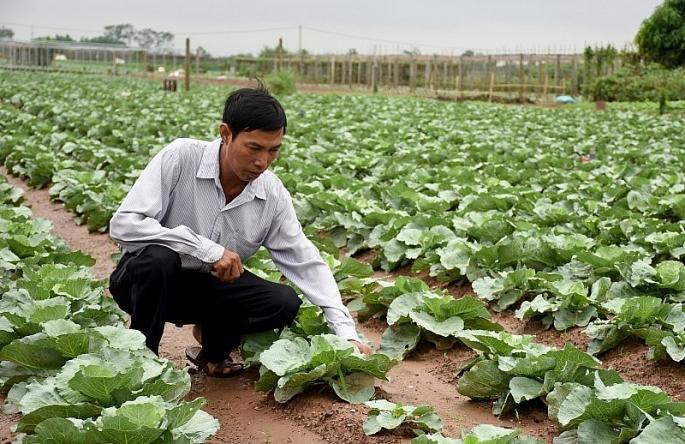 Hà Nội phê duyệt Kế hoạch cơ cấu lại ngành nông nghiệp giai đoạn 2019-2020