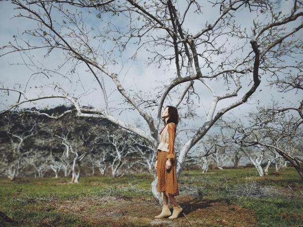 Ngắm hoa mận Mộc Châu những ngày cuối năm đẹp bình yên trong bộ ảnh của cô gái trẻ 2