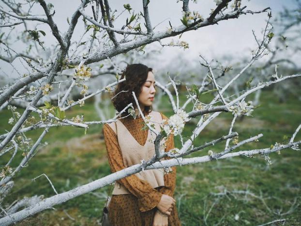 Ngắm hoa mận Mộc Châu những ngày cuối năm đẹp bình yên trong bộ ảnh của cô gái trẻ 4