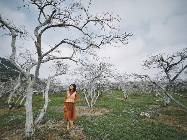 Ngắm hoa mận Mộc Châu những ngày cuối năm đẹp bình yên trong bộ ảnh của cô gái trẻ 5