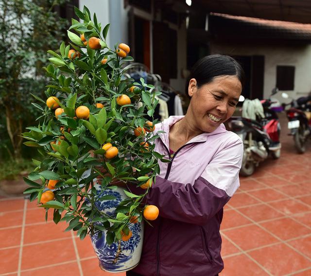 Nụ cười viên mãn của người nông dân Văn Giang khi Tết đang cận kề bởi lẽ riêng với gia đình chị Mai năm nay vừa thắng lớn đối với 700 chậu quất bonsai hồ lồ.