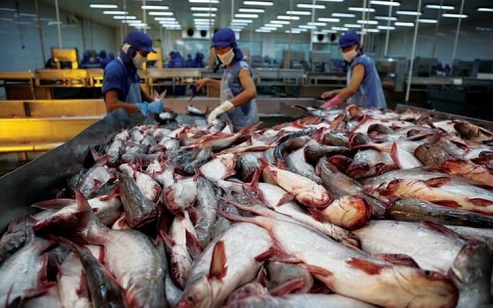 Năm 2019 xuất khẩu cá tra có thể đạt 2,4 tỷ USD