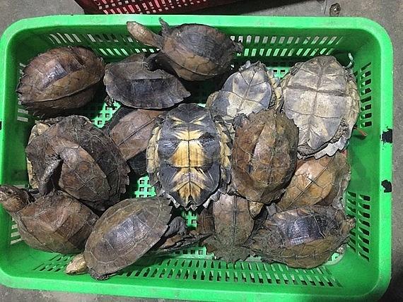 Kiểm soát chặt chẽ buôn bán, tiêu thụ động vật hoang dã và phóng sinh các loài ngoại lai xâm hại