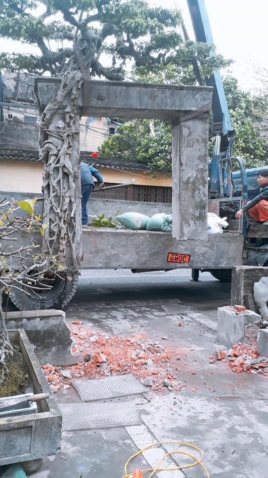 Trong nhà hiện có cả trăm cây cảnh to, vài trăm cây nhỏ nhưng ông Tình rất muốn mua thêm cây sanh Nam Định làm dày bộ sưu tập của mình.