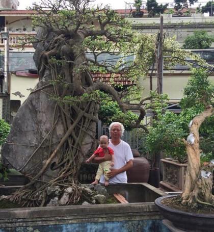 Không chỉ có cây sanh này, ông Tình còn là một nghệ nhân chơi cây cảnh đích thực khi sở hữu vườn nhà với số lượng lên tới vài trăm cây cảnh, trong đó nhiều cây có giá trị trên trăm triệu.