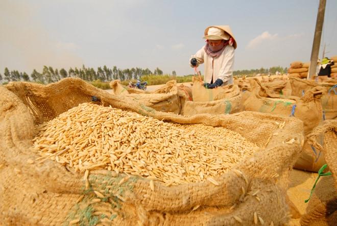 Tạo điều kiện giảm lãi suất và tăng hạn mức tín dụng cho sản xuất, kinh doanh lúa gạo