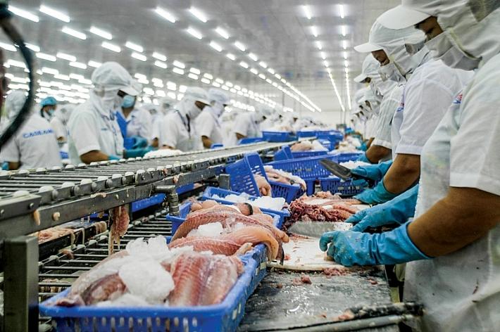 Giá cá tra Việt Nam có thể giảm dần vào năm 2019