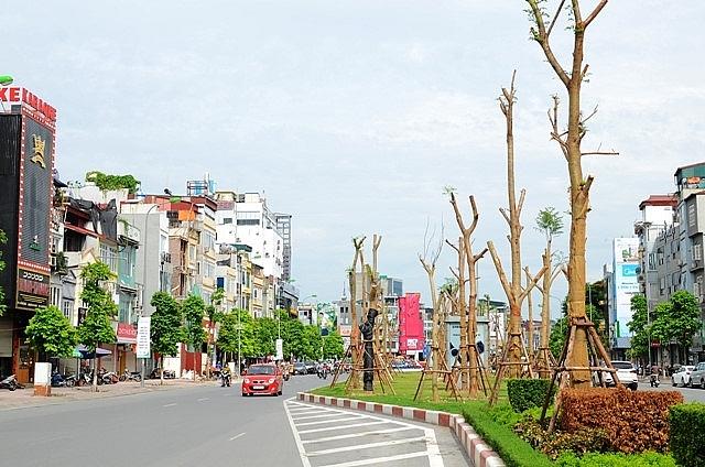 Hà Nội đạt 100,9% kế hoạch trồng cây dịp Tết Nguyên đán