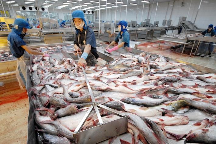 Xuất khẩu cá tra sang Mexico tăng 18,2%