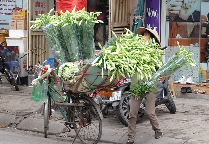 Hoa loa kèn xuống phố gọi tháng Tư về
