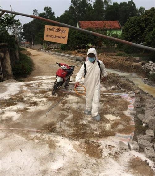Hà Nội: Hơn 6.000 con lợn bị tiêu hủy do dịch tả châu Phi