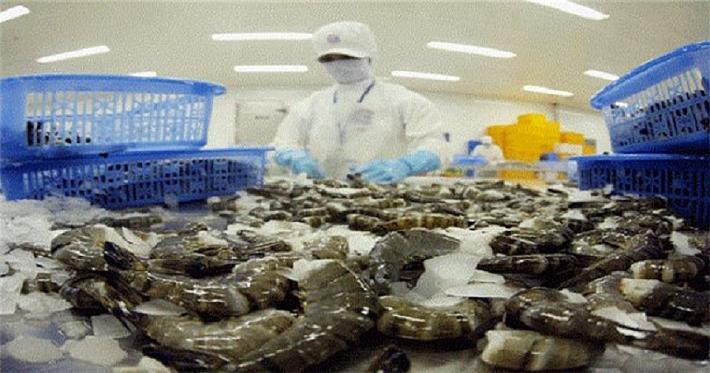 Nhiều tiềm năng cho xuất khẩu tôm Việt Nam sang Canada
