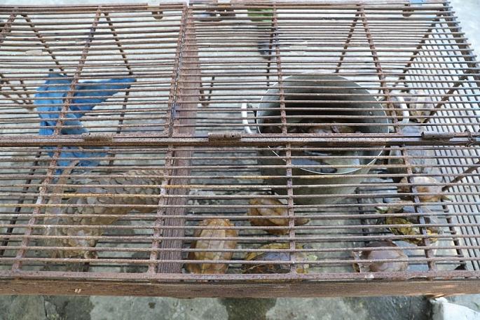 Phát hiện vụ vận chuyển động vật hoang dã và gỗ trắc trái phép