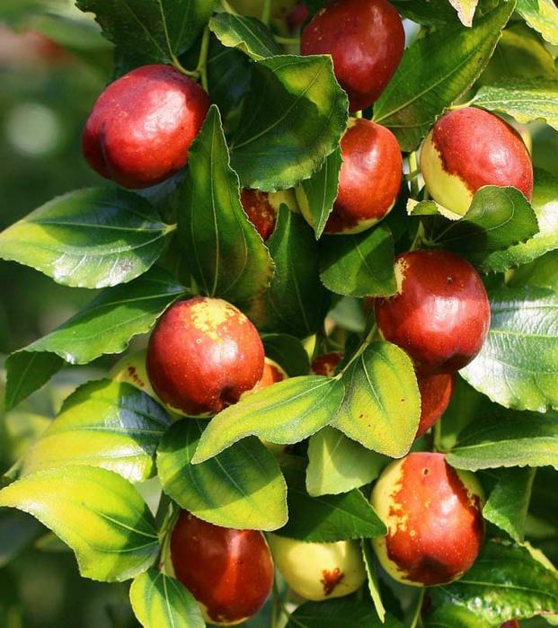 6 loại trái cây càng ăn càng béo, nguy hiểm hơn thịt, cơm chị em cần tránh xa 0