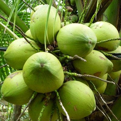 6 loại trái cây càng ăn càng béo, nguy hiểm hơn thịt, cơm chị em cần tránh xa 5