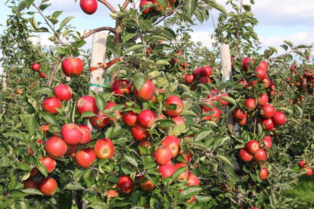 6 loại trái cây càng ăn càng béo, nguy hiểm hơn thịt, cơm chị em cần tránh xa 8