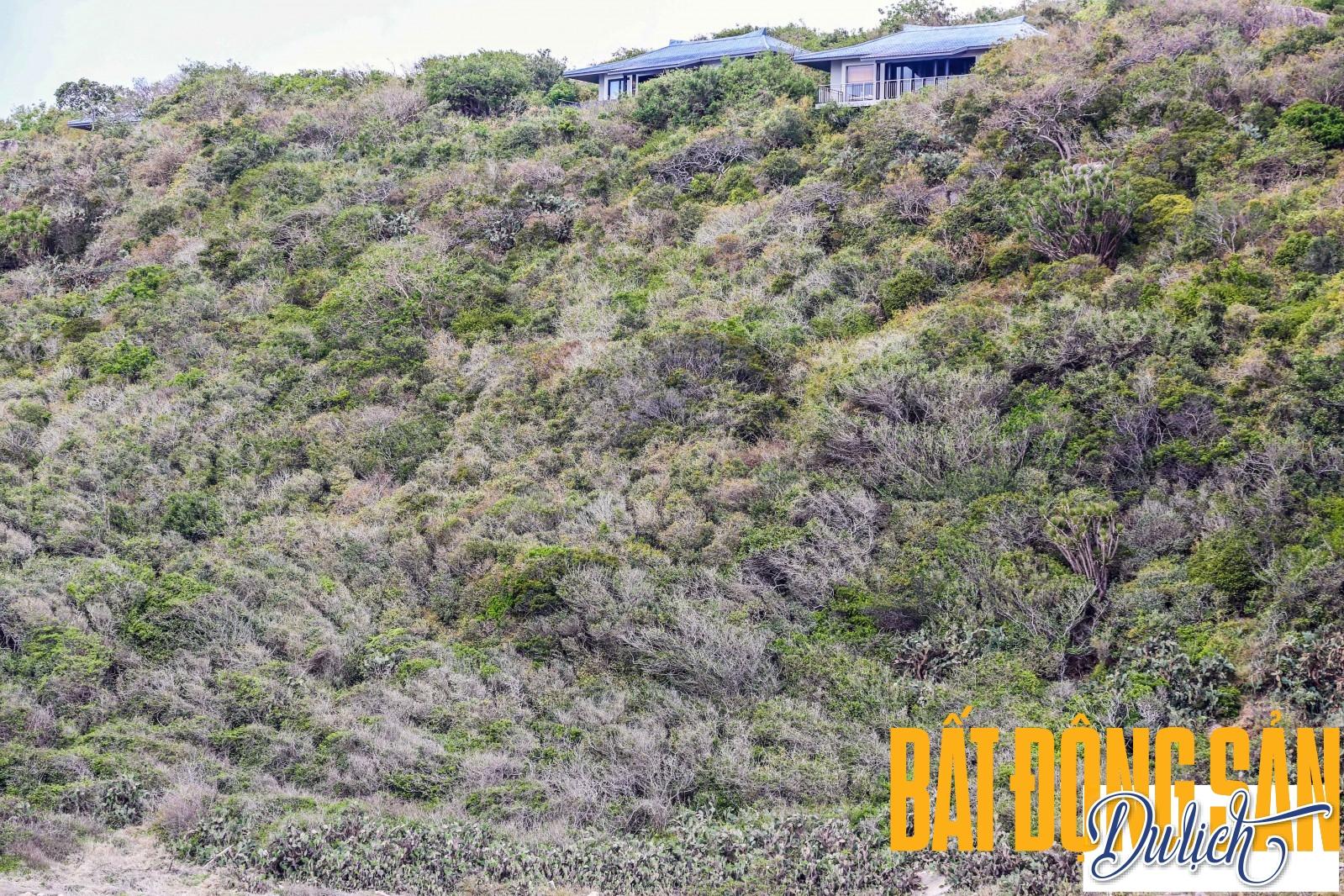 Từ tàu đáy kính lênh đênh trên vịnh Vĩnh Hy nhìn lên, Amanoi Resort ẩn hiện trên dãy núi Chúa, vì thế, nó có view vô cùng đắt giá. Mọi thứ tại Amanoi được thiết kế với gu thẩm mỹ tinh tế và thông minh thế nên nó có mức giá cao nhất là 100 triệu, rẻ nhất cũng cỡ gần 14 triệu cho một đêm lưu trú tại resort.