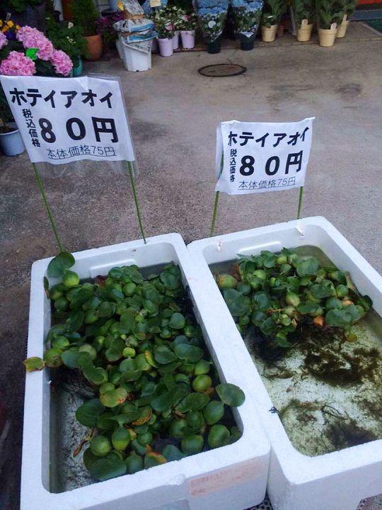 5 thực phẩm ở Việt Nam giá rẻ như cho lại là hàng 'hiếm' bán giá cả triệu đồng ở trời Tây
