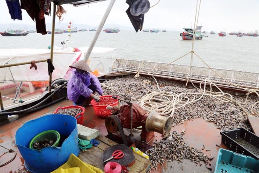 Phát hiện nhiều tàu thuyền sử dụng công cụ đánh bắt tận diệt