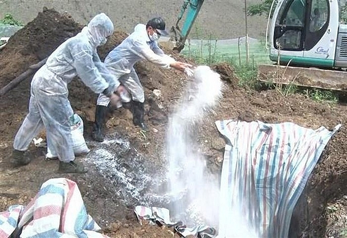 Đồng Nai phát hiện ổ dịch tả lợn châu Phi lớn nhất cả nước