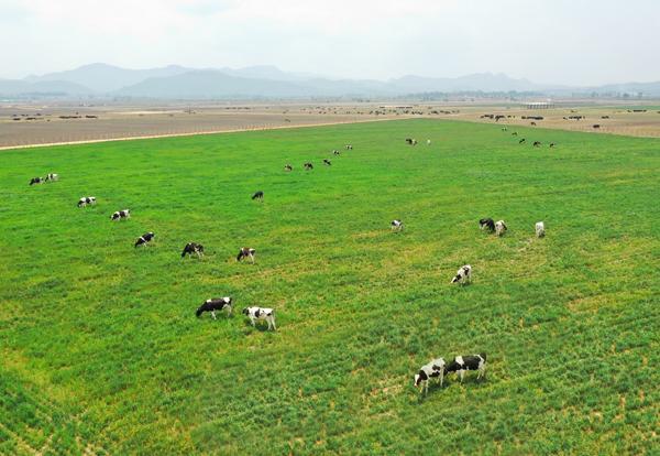 Các trang trại bò sữa Organic của Vinamilk là một trong những điểm nhấn được Hội nghị đánh giá cao.
