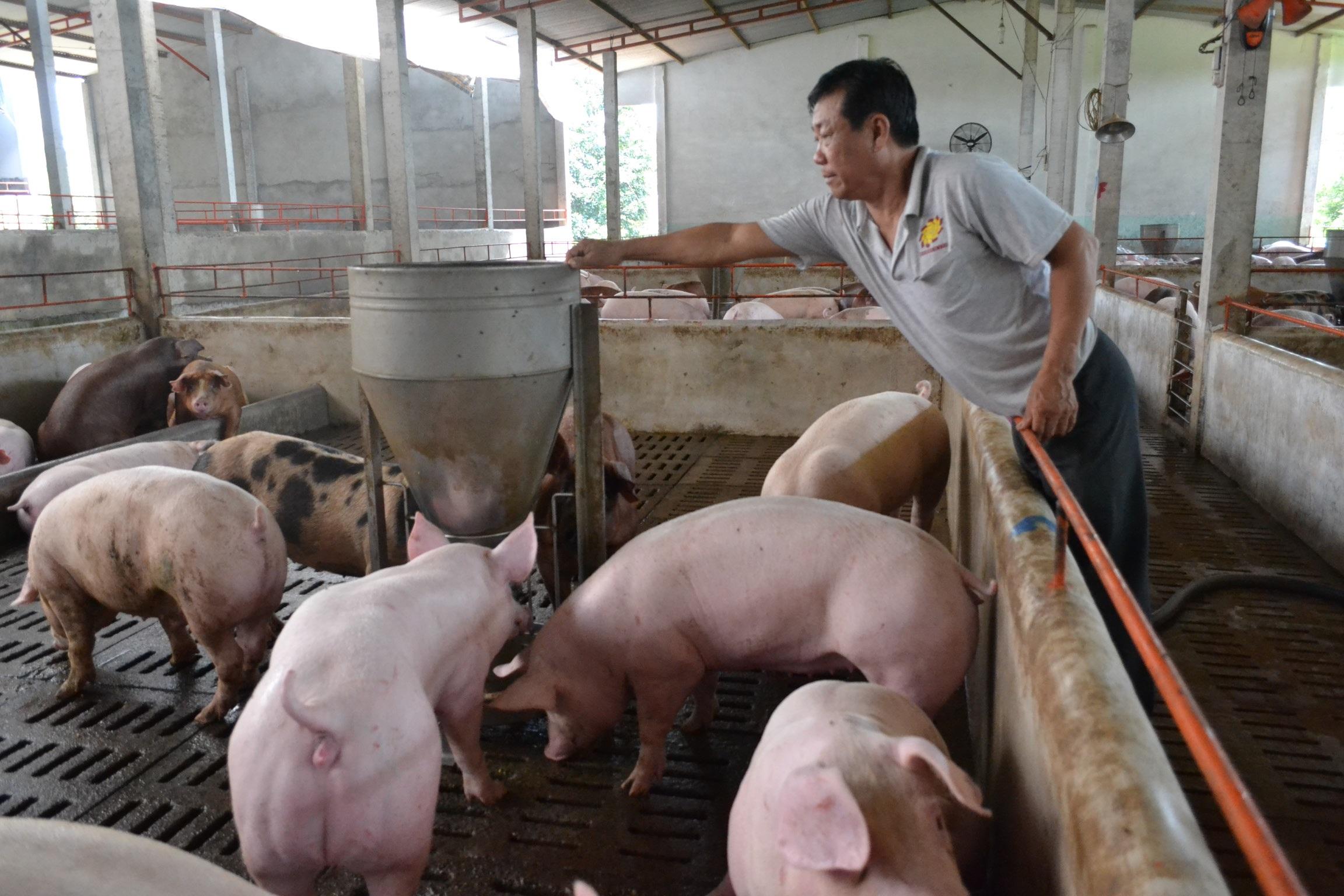 Dịch tả lợn châu Phi đánh tụt nhiều chỉ tiêu tăng trưởng của ngành nông nghiệp - Ảnh 1