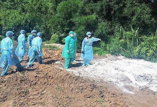 Tây Ninh công bố nhiễm dịch tả lợn châu Phi
