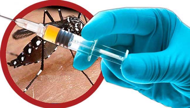 Hoàn tất nghiên cứu vắc xin sốt xuất huyết tại Việt Nam