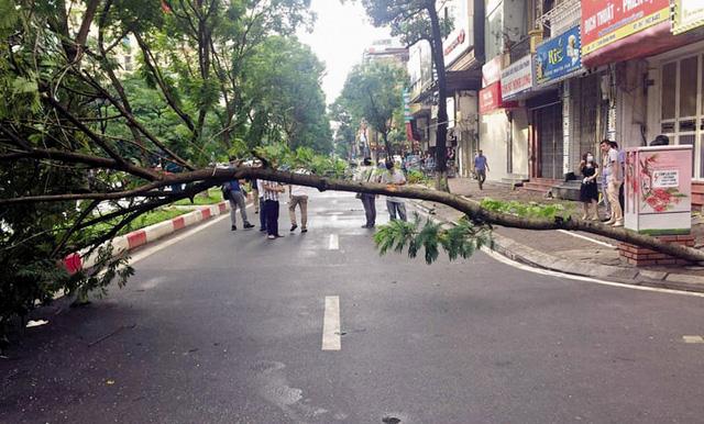 Cây phượng đổ làm chết người ở Hà Nội: Nỗi lo nơm nớp mùa mưa bão