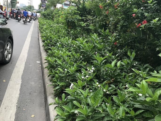 Thoảng nhẹ hương nhài dọc đường ven sông Tô Lịch
