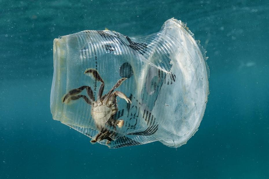 Báo động ô nhiễm đại dương do rác thải nhựa