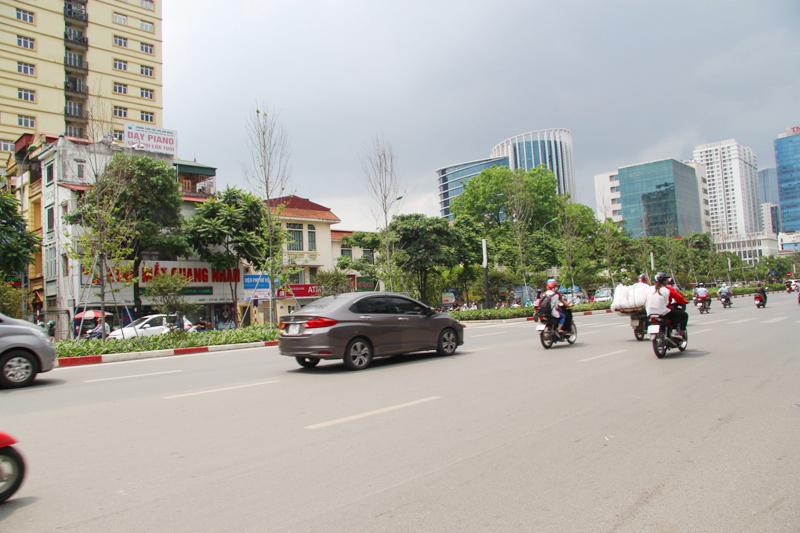 Hà Nội: Cây phong lá đỏ xơ xác trên các tuyến phố