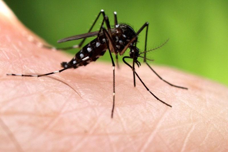 10 cách đuổi muỗi hiệu quả nhất mà không cần dùng thuốc xịt hoặc hóa chất