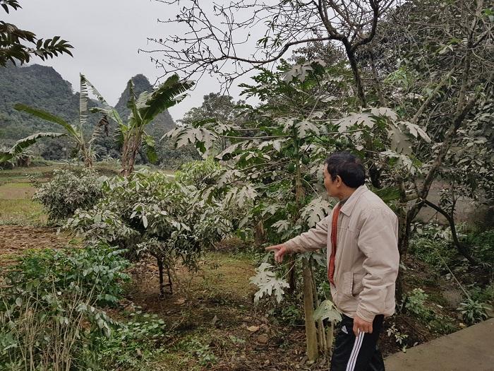 Cả khu vườn cây trồng gia đình ông T. bị ảnh hưởng nặng nề do bụi từ nhà máy xả ra.