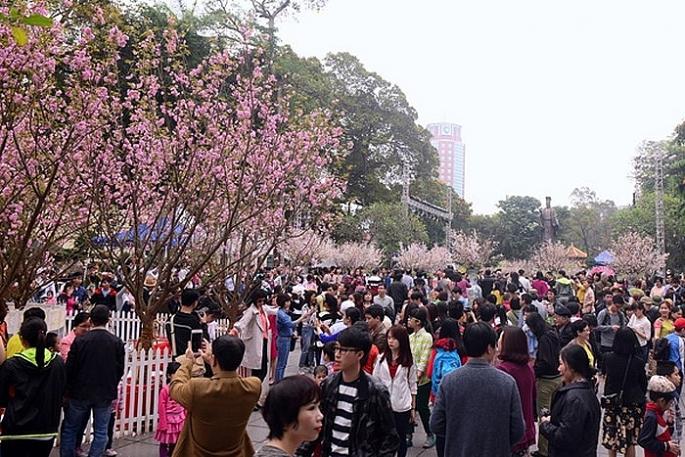 Lễ hội hoa anh đào Nhật Bản - Hà Nội 2019 kéo dài đến hết ngày 2-4