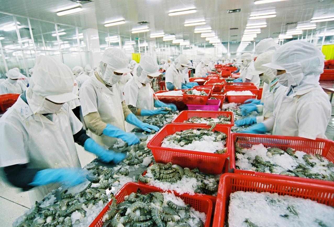Hoa Kỳ tiếp tục đặt niềm tin vào sản phẩm tôm từ Việt Nam