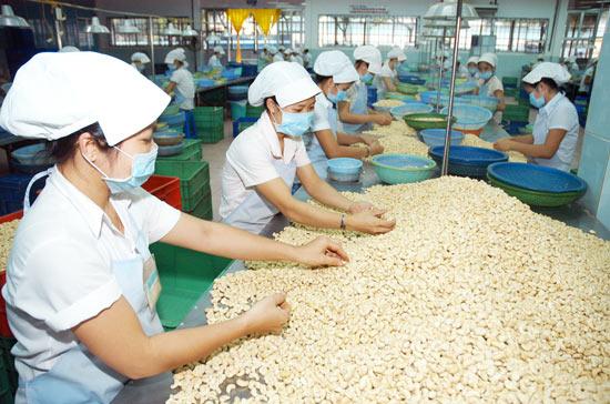 Xuất khẩu hạt điều tăng trưởng mạnh
