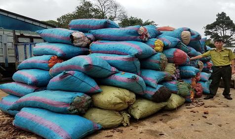 Gia Lai: Bắt quả tang vận chuyển hàng trăm bao vỏ thông