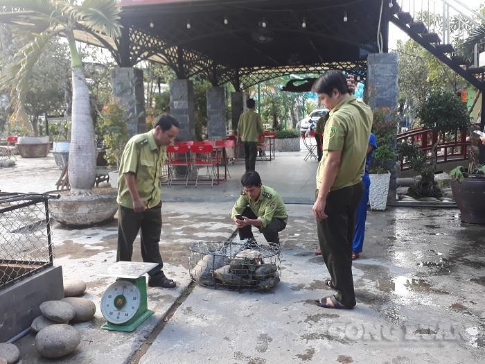 Lực lượng chức năng huyện Bắc Trà My thu giữ 7 cá thể rùa có trọng lượng hơn 30kg. (Ảnh: H.T)