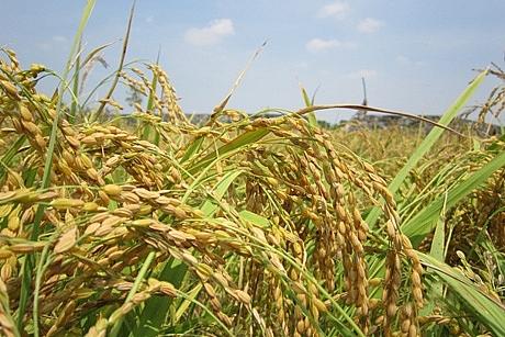 Xuất khẩu gạo trong 4 tháng đầu năm giảm tất cả các mặt