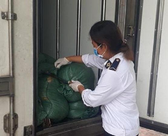Nghệ An:p/Bắt xe tải chở 2 tấn lòng lợn bốc mùi thối - Ảnh 1
