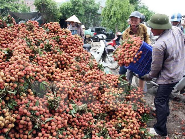 Giá vải quả dự báo niên vụ 2019 tại thị trường nội địa Trung Quốc sẽ cao